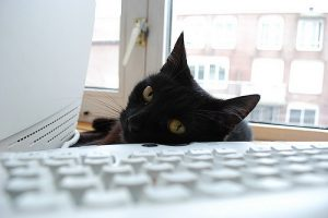 A cat stares at the camera across a keyboard.