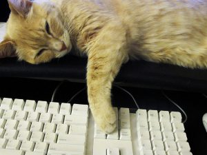 A cat lays, disinterested, next to a computer.